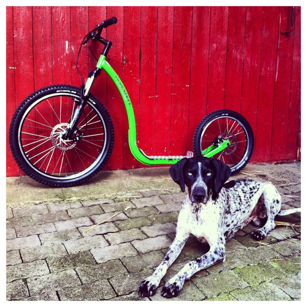 Dog Scooter XH9 XC Offroad
